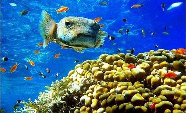 Рыба крупным планом