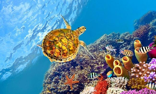 Цветная черепаха