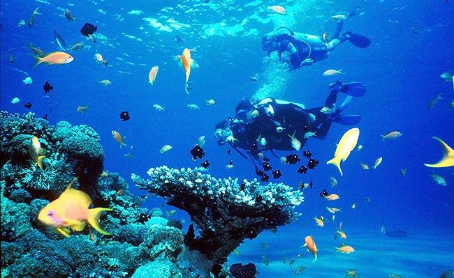 Кораллы голубой дыры