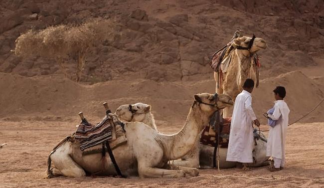 Бедуинская деревня
