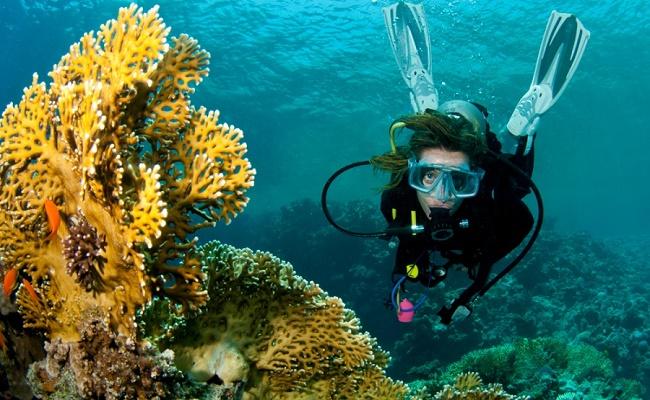 Яркие кораллы