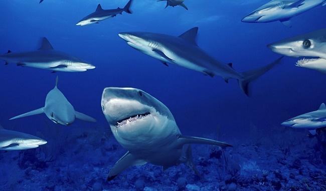 Морские хищники