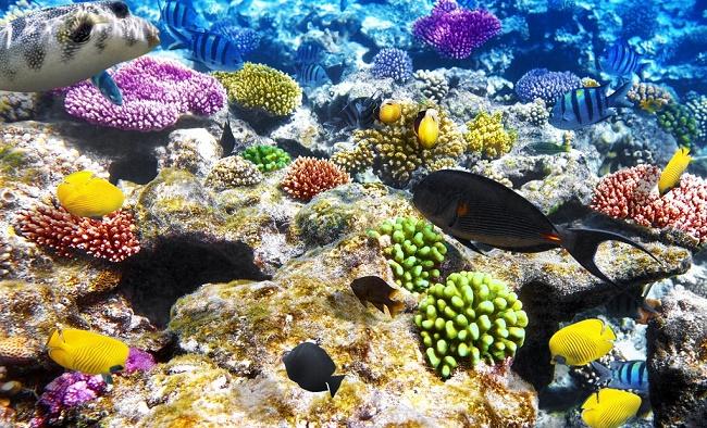 Цветные кораллы