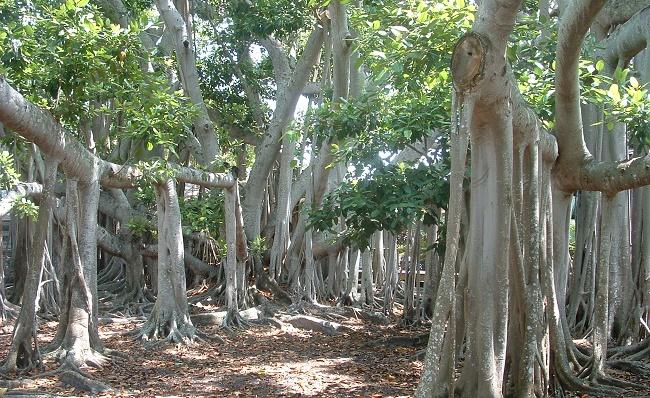 Крупные корни