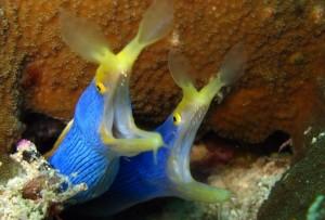 Желто-синие рыбы