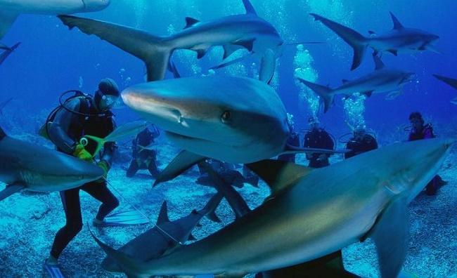 Акулы Красного моря