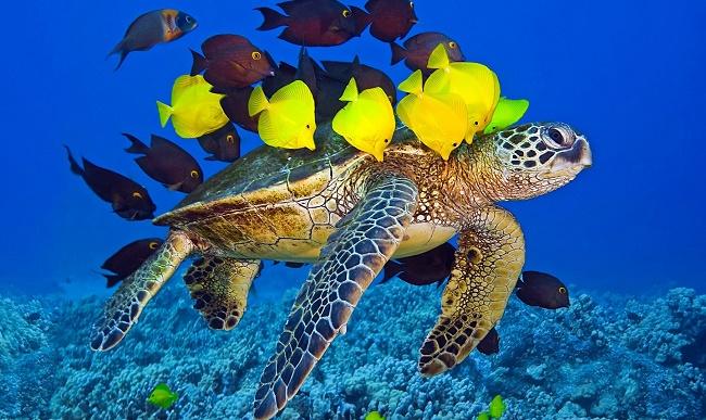 Черепаха и рыбки