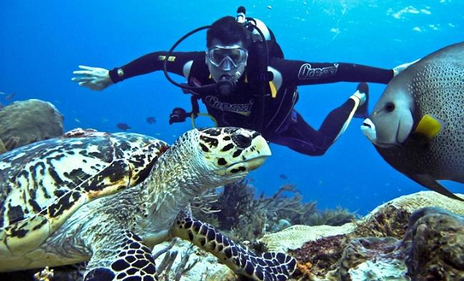 Дайвер и черепахи