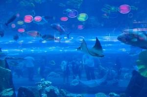Рыбы за стеклом