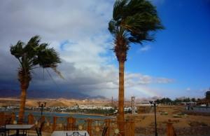 Пальмы под ветром