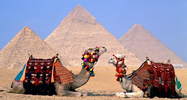 Верблюды у пирамид